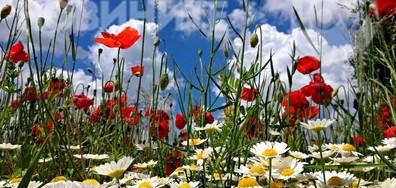 Цветна фантазия на майското поле