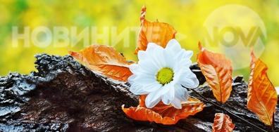 Нежно дъждовно-есенно настроение