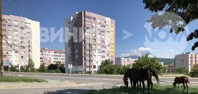 На сянка в горещата неделя в Благоевград