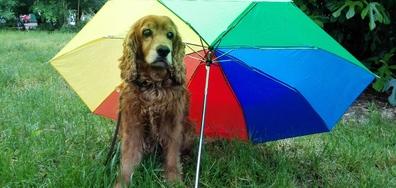 Стига вече дъжд