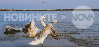 Морски поздрав от Варна