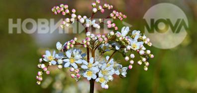 Нежни полски цветя...