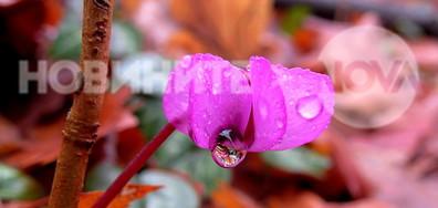 Пролетна нежност с дъждовни капчици!