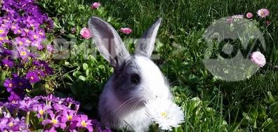 Великденско зайче в Русенско