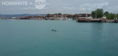 Делфини в Несебър