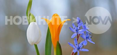 Пролетта все по-осезаемо напомня за себе си