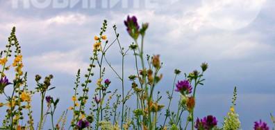Сред цветните юлски треви