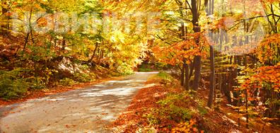 Истинска експлозия от есенни цветове