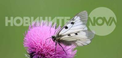 Сезонът на пеперудите