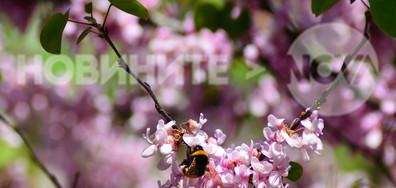 Работна пчеличка