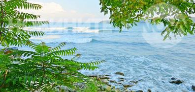 Море и зеленина... магично!