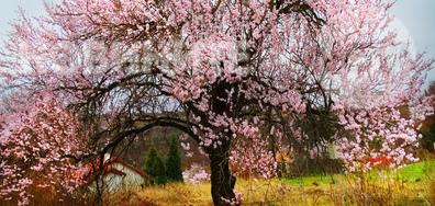 Пролетта във Варна