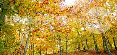 Есенна импресия