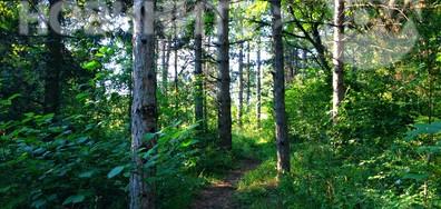 Отново търсим горската прохлада