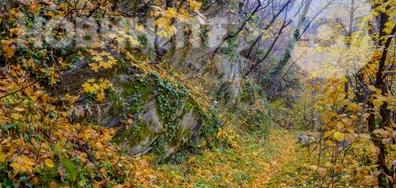 Все още златна есен
