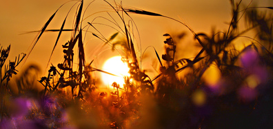 Залез с ухание на полски треви