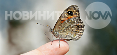 Бягай, пеперудке