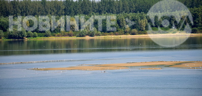 Река Дунав при Свищов с островче за птици