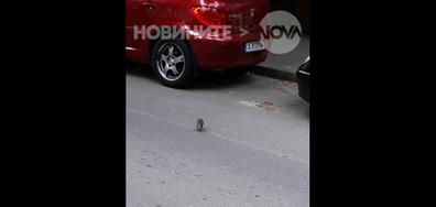 """Плъхчо и боклуците на """"Възраждане"""" в Бургас"""