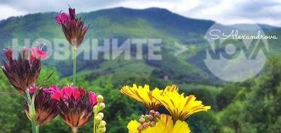 Цветна феерия в планината