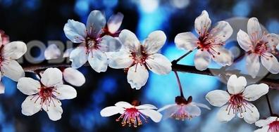 Най-красивата пролет