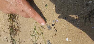Плажът в Несебър