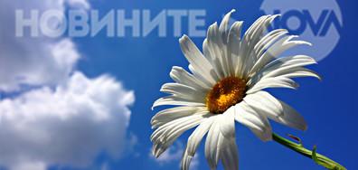 Лятна феерия в синьо и бяло