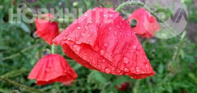 Бисерни капчици майски дъжд