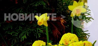 """И цветята в код """"жълто"""""""