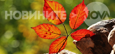Да се насладим на последните слънчеви есенни дни...