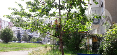 Гарван кълве в парка