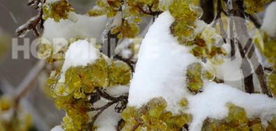 Ледена първа пролет в Разградско