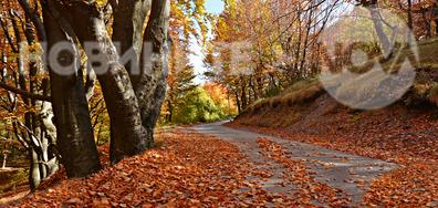 Есента красиво е разстлала своето килимче...