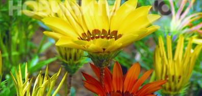 Цветята на Плевен!
