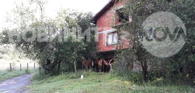 Отново безстопанствени коне в Кюстендилско