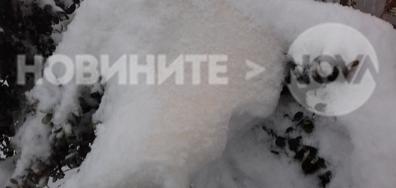 Цветен сняг