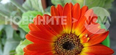 Слънчево и усмихнато цвете!