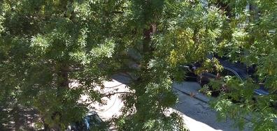 Масова сеч на дървета в Бургас