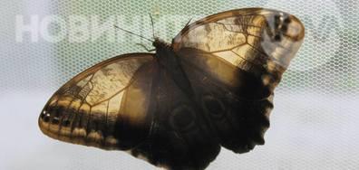 Светът на екзотични насекоми
