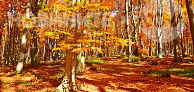 В слънчевата есенна гора
