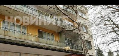 Коза в центъра на Горна Оряховица