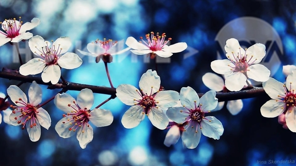 Пролетен полъх