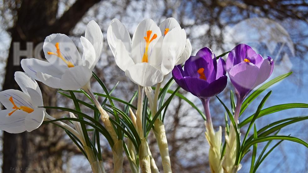 Свеж пролетен полъх