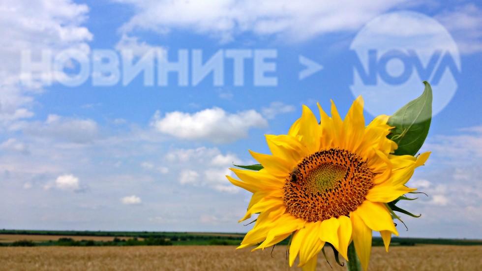 Винаги отправил златния си взор към слънцето