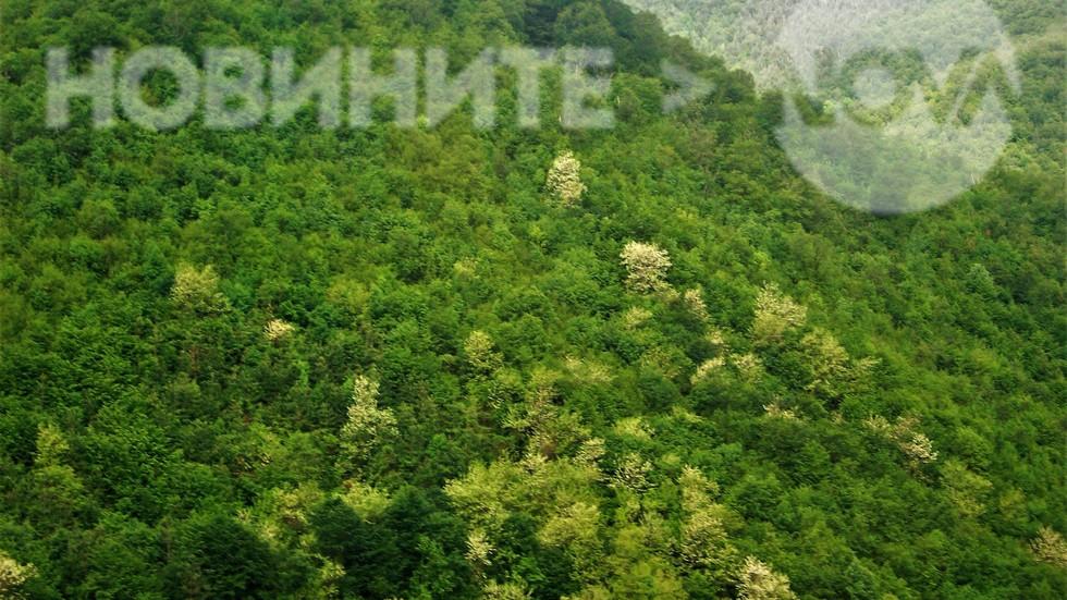В планината свежо зелено и пролетно!