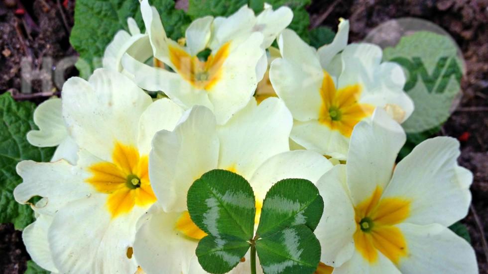 Много щастие и късмет да ни носи пролетта!