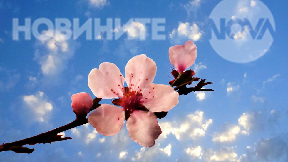 Пролетна усмивка в розов цвят