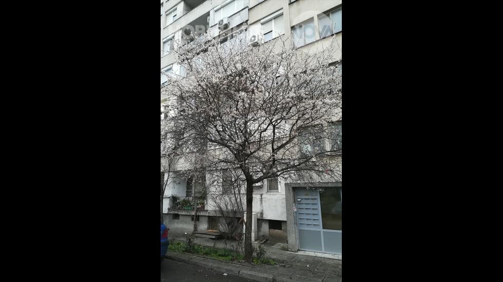 Пролетта идва
