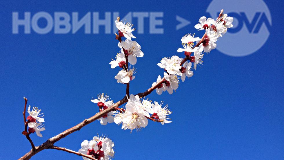 Прекрасен първи пролетен ден
