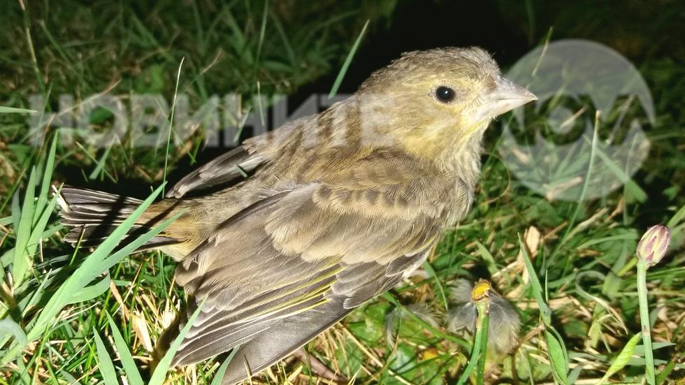 Птиче